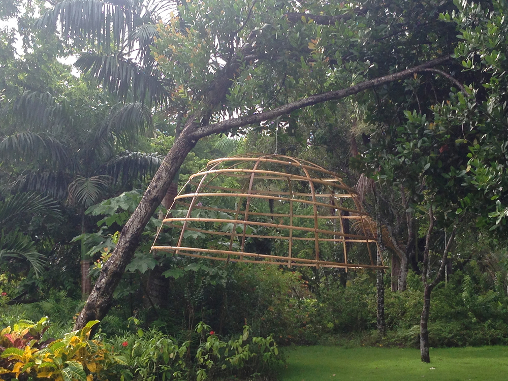 bambu1